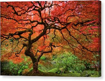 Red Leaf Canvas Print - Japenese Garden, Portland by Jesse Estes