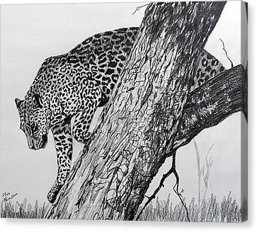 Jaquar In Tree Canvas Print by Stan Hamilton