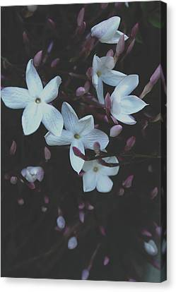 Canvas Print featuring the mixed media Jasmine Dream- Photography By Linda Woods by Linda Woods