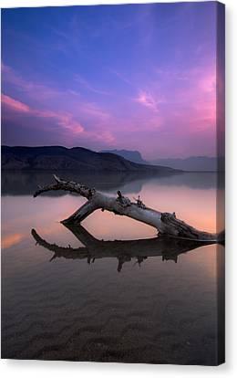 Jasper Lake Log Canvas Print by Cale Best