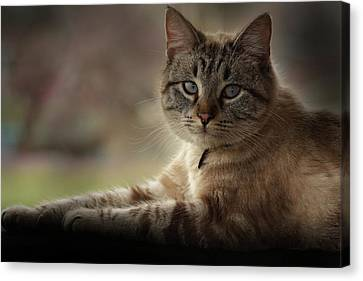 Canvas Print featuring the photograph Jaspurr by Kim Henderson