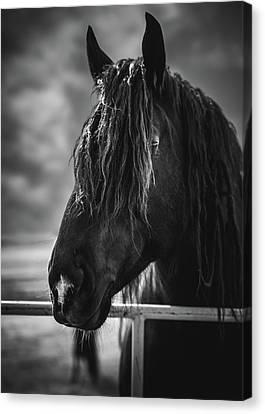 Jay The Rasta Horse Canvas Print