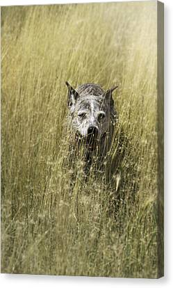 Jazzy In The Grasses Canvas Print