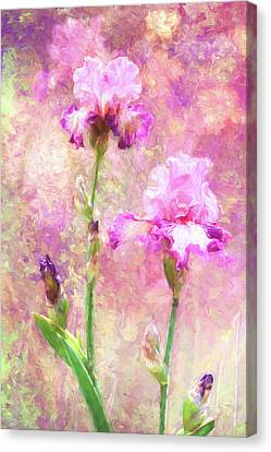 Jazzy Irises Canvas Print by Diane Schuster