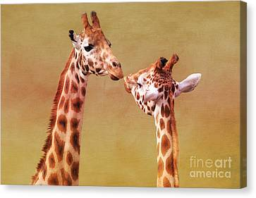 Je T'aime Giraffes Canvas Print by Terri Waters