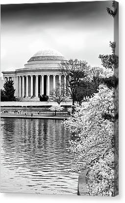 Jefferson Memorial Cherry Blosum Time Canvas Print