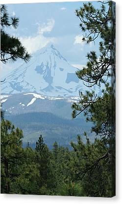 Canvas Print featuring the photograph Jefferson Pines by Laddie Halupa