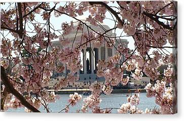 Canvas Print featuring the photograph Jefferson Through The Cherry Blossoms by Charles Kraus