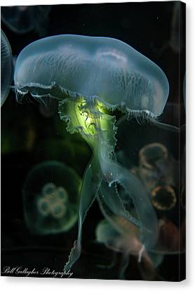 Canvas Print - Jellyfish by Bill Gallagher