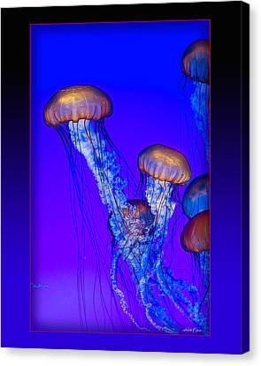 Jellyfish Floating Up Canvas Print by Linda Olsen