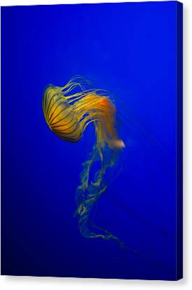 Jellyfish From The Deep Blue Canvas Print by Nila Newsom