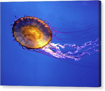 Jellyfish I Canvas Print
