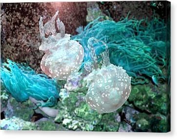 Jellyfish In Aquarium Canvas Print