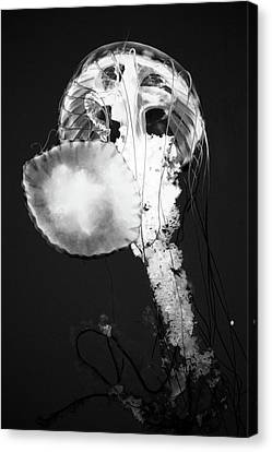 Jellyfish In Black And White Canvas Print