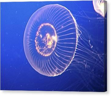 Jellyfish Iv Canvas Print