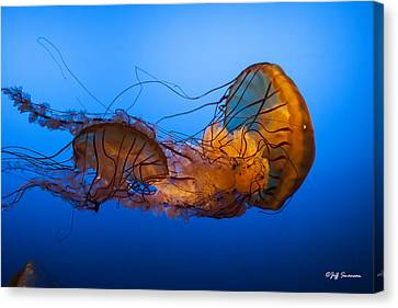 Jellyfish Canvas Print by Jeff Swanson