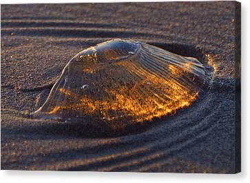 Jellyfish Canvas Print - Jellyfish Sunset #2 by Ryan Scholl