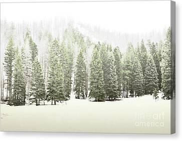 Jemez Mountains Pine Trees Snow Canvas Print by Andrea Hazel Ihlefeld