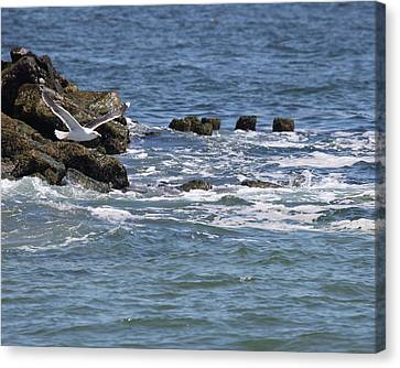 Jersey Shore Canvas Print by Joseph G Holland