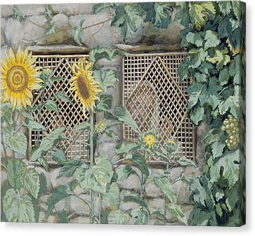 Jesus Looking Through A Lattice With Sunflowers Canvas Print by Tissot