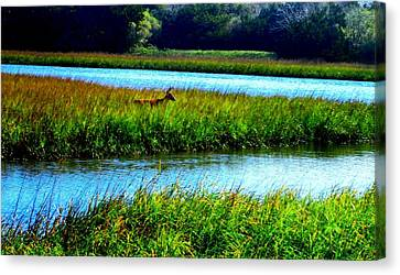 Jetty Mayport Buck #3 Canvas Print by Deb Campbell