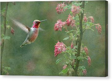 Jewel In The Garden Canvas Print by Angie Vogel