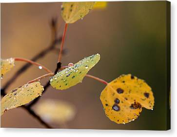 Jewels Of Autumn Canvas Print by Jim Garrison