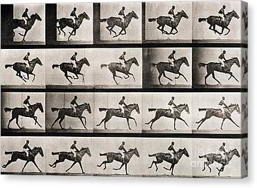 White Horses Canvas Print - Jockey On A Galloping Horse by Eadweard Muybridge