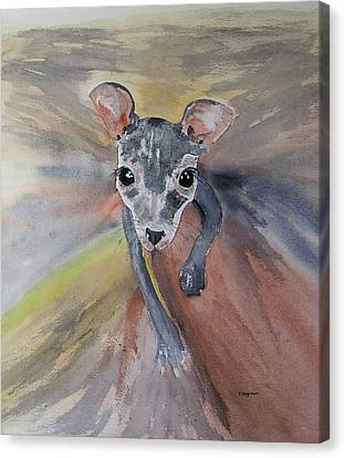 Joey In Mums Pouch Canvas Print