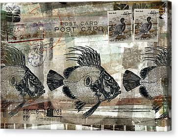 John Dory Fish Postcard Canvas Print by Carol Leigh