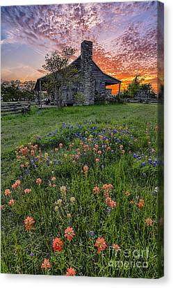 John P Coles Cabin And Spring Wildflowers At Independence - Old Baylor Park Brenham Texas Canvas Print by Silvio Ligutti