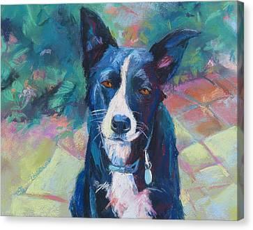 Jojo, Border Collie,kelpie Mix Canvas Print