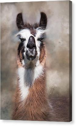 Canvas Print featuring the photograph Jolly Llama by Robin-Lee Vieira