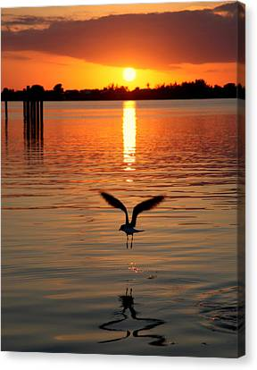Jonathan Livingston Seagull Canvas Print by Karen Wiles
