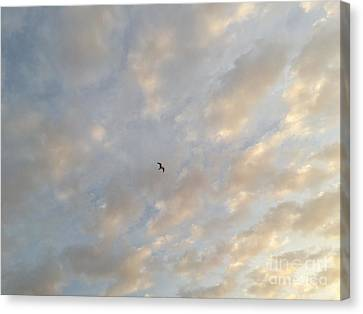 Jonathan Livingston Seagull Canvas Print