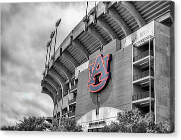 Jordan Hare Canvas Print by JC Findley