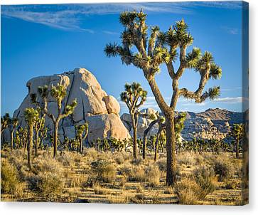 Joshua Tree And Intersection Rock Canvas Print by Joe Doherty