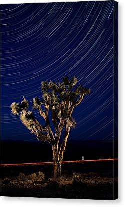 Joshua Tree And Star Trails Canvas Print by Steve Gadomski
