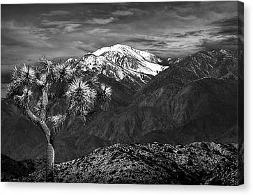Canvas Print featuring the photograph Joshua Tree At Keys View In Black And White by Randall Nyhof