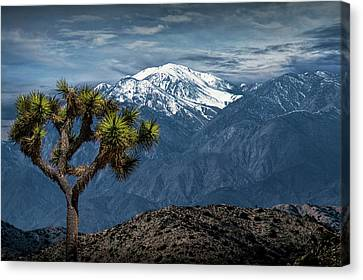 Canvas Print featuring the photograph Joshua Tree At Keys View In Joshua Park National Park by Randall Nyhof