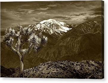 Canvas Print featuring the photograph Joshua Tree At Keys View In Sepia Tone by Randall Nyhof