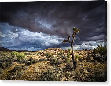 Joshua Tree Light Canvas Print by Peter Tellone