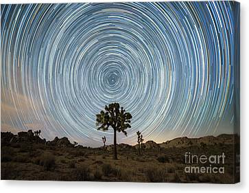Joshua Tree Star Trails  Canvas Print by Michael Ver Sprill