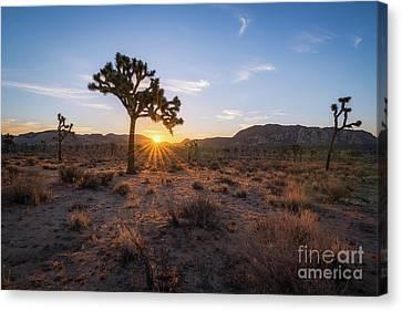 Joshua Tree Sunrise  Canvas Print by Michael Ver Sprill