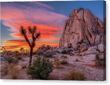 Joshua Tree Sunset Canvas Print by Peter Tellone