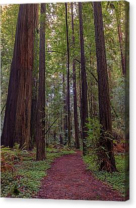 Journey Into The Primordial Forest Canvas Print