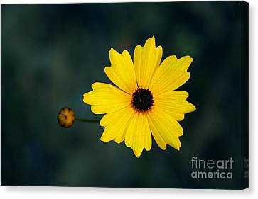 Canvas Print featuring the photograph Joy by Adrian LaRoque