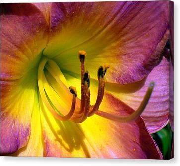 Joyful Lily Canvas Print by Cynthia Daniel