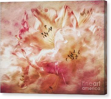 Jubilee Blush Canvas Print
