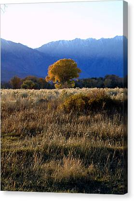 Judy's Tree Canvas Print by Steven Holder